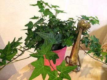 差し入れで頂いた観葉植物